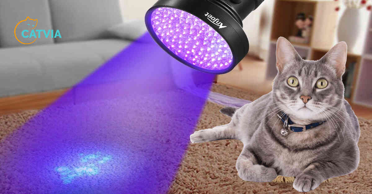 Cats pee is fluorescent