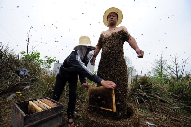 Chinese farmer She Ping lined his body with seventy-three  pounds of bees
