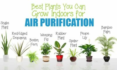 TOP 10 Indoor Plants That You Can Grow in Your House Right Now!