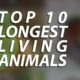 Longest Living Animals