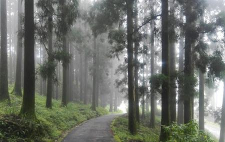 Dow Hill, Kurseong, West Bengal