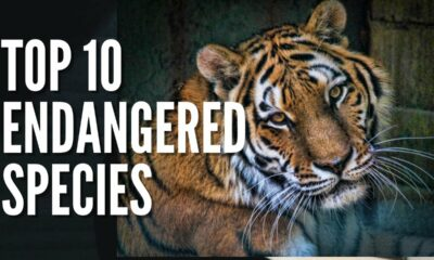 top 10 of the Most Famous Endangered Species