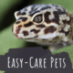 Top 10 Small, Low-Maintenance Pets That Are Easy to Take Care Of