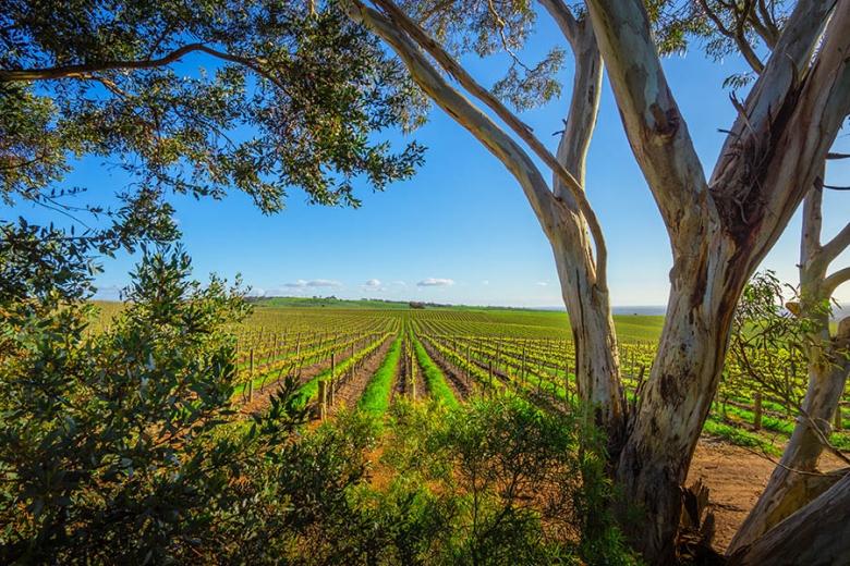 Australia has over 60 separate wine regions