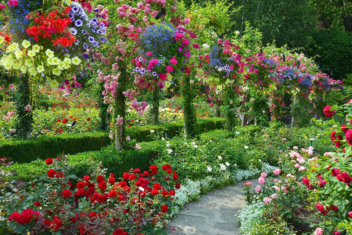 Pin by Julie Rorden on Rose Garden | Beautiful flowers garden, Rose garden landscape, Rose garden design