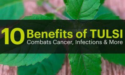 10 benefits of tulsi