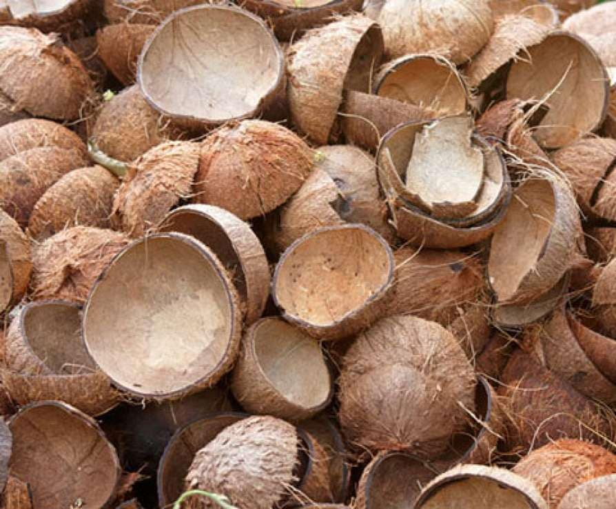 No more a thrash! Earn handsomely with coconut shells | Coconut shell uses| economy| business and finance