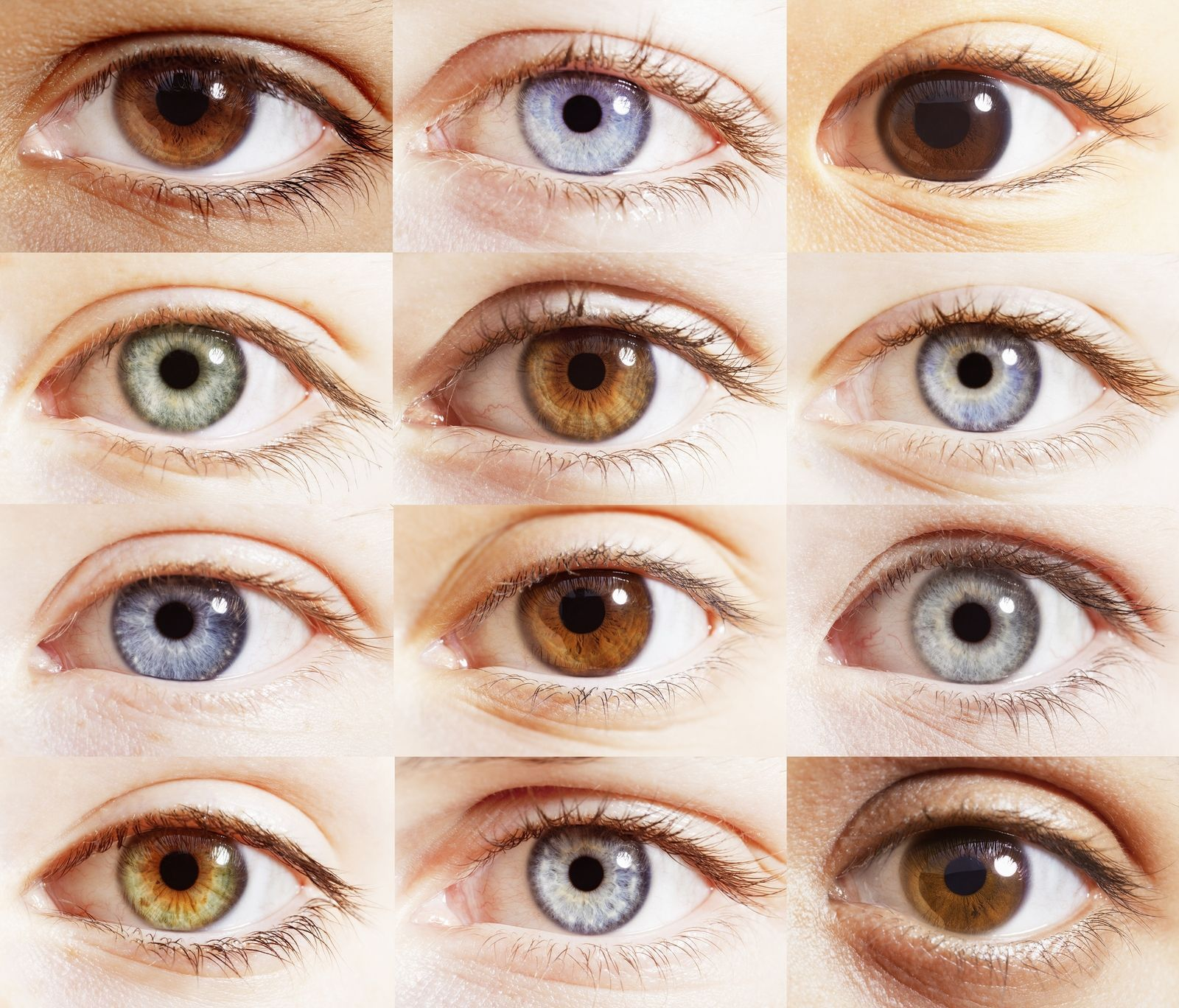 If you have blue eyes, they're actually brown and you just don't realise it | Eye color chart, Blue green eyes, Types of eyes
