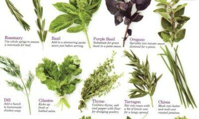 Top 10 herbs