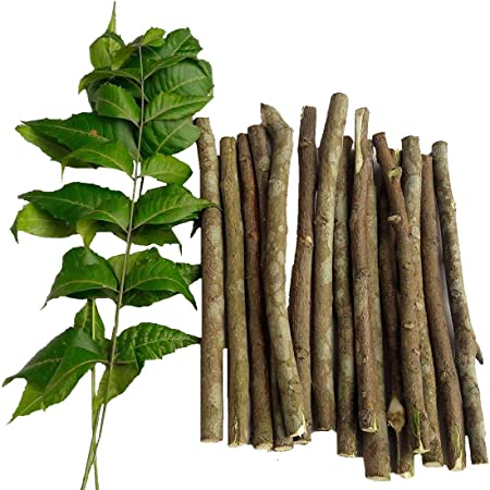BuyandCheers Natural Neem Chew Sticks/Tree Datun Twigs Organic Toothbrush, 20 Pieces: Amazon.in: Health & Personal Care