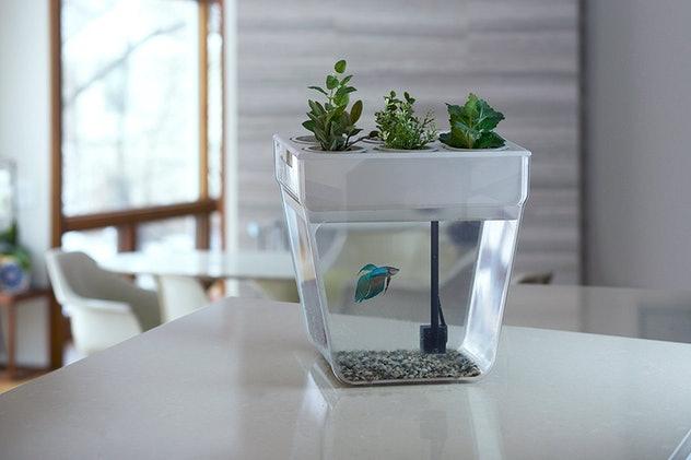 Eco fishbowl