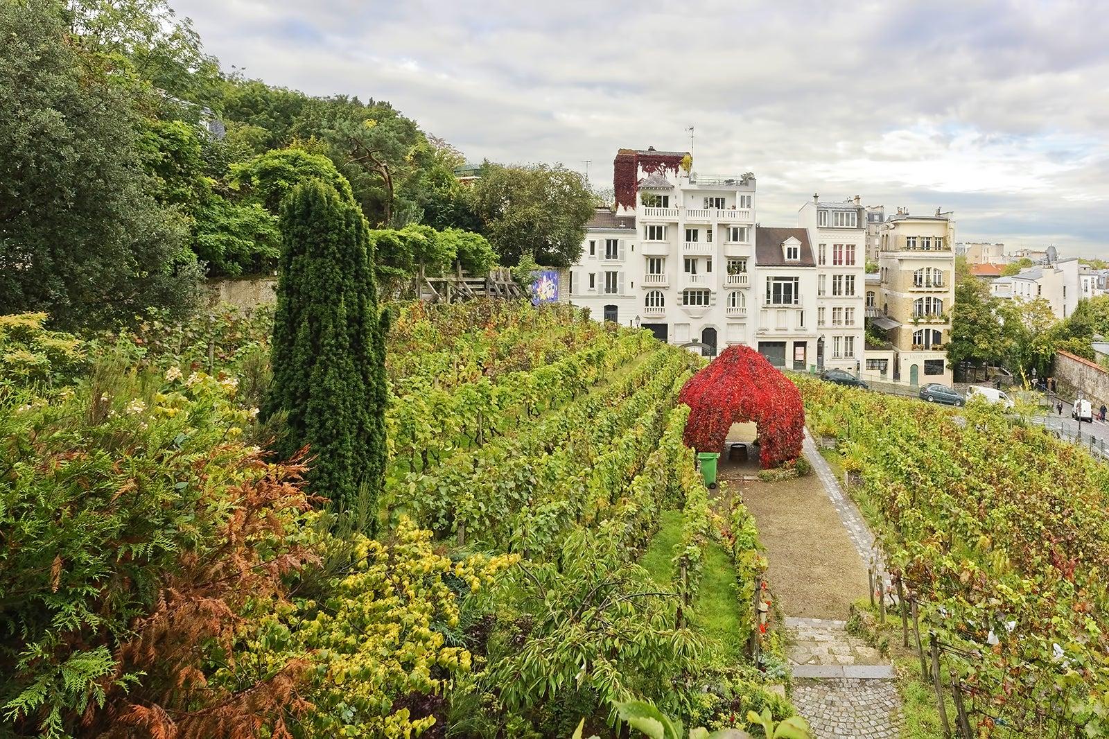 Paris Vineyards