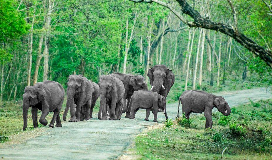 Bandipur National Park - Weekend Thrill