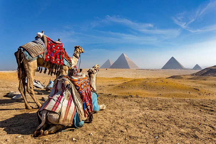 Camels in front of the Pyramids of Giza