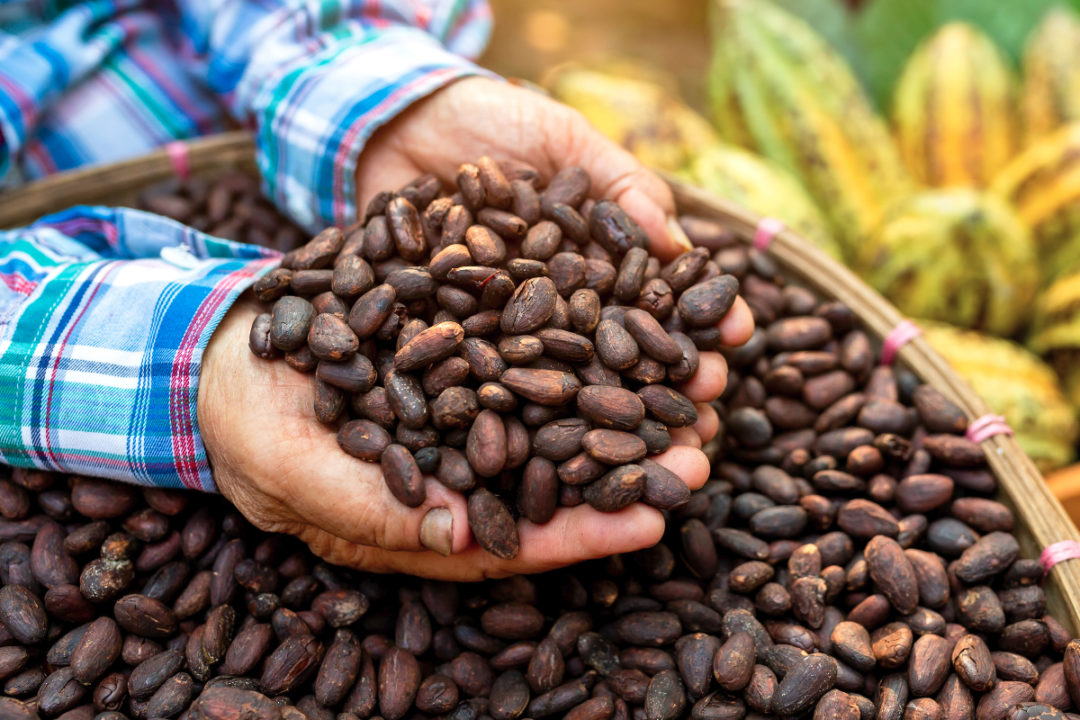 Cocoa bean futures seen down 6% by yearend | 2021-02-08 | Food Business News