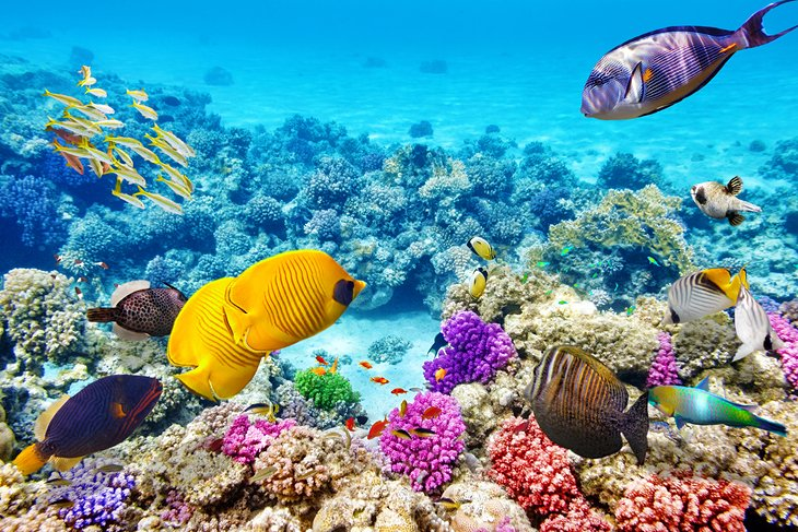Colorful fish and coral on the Great Barrier Reef, Australia