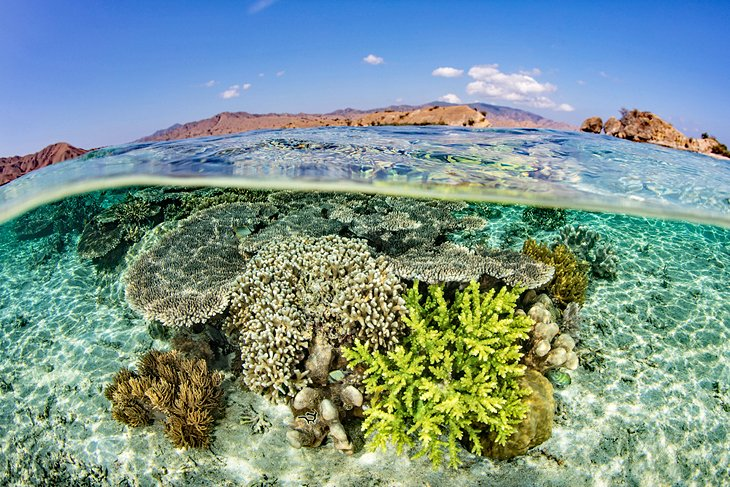 Coral reef off Komodo National Park