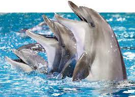 Dubai dolphine show
