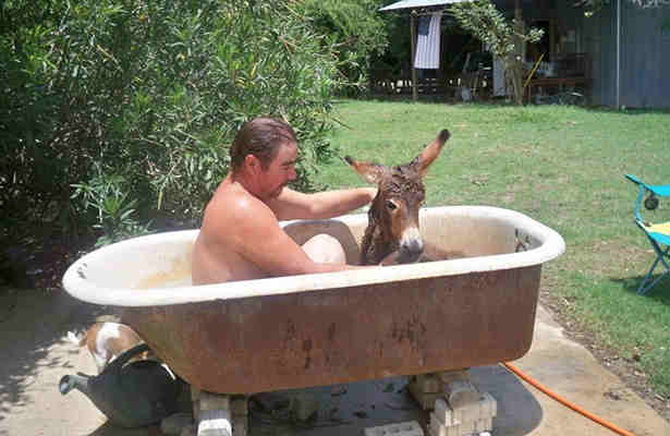 It is against the law to have a sleeping donkey in your bathtub after 7 pm