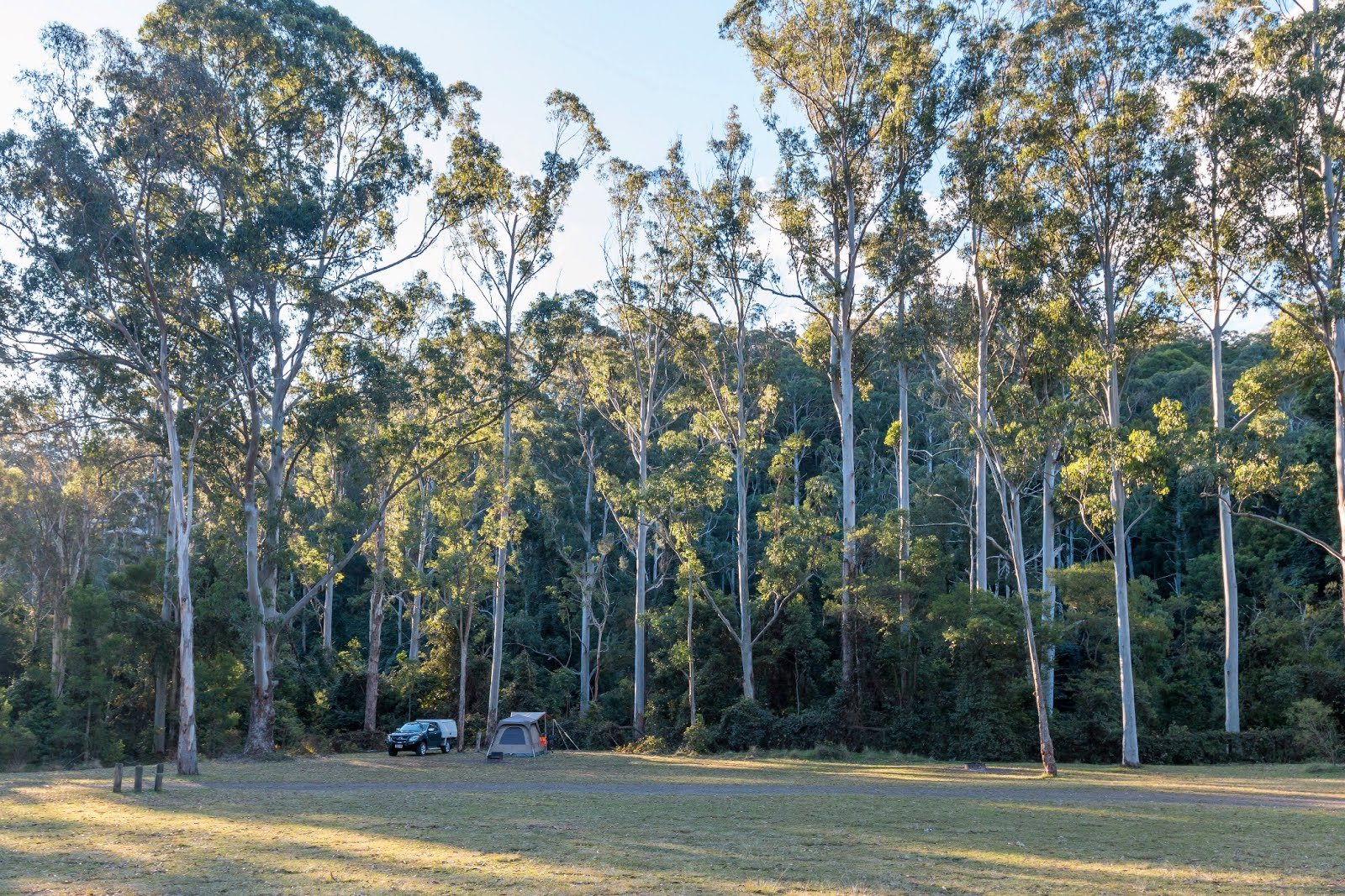 National Park Odyssey: Manna Gum Camping Area, Goomburra Section of Main Range National Park, QLD.