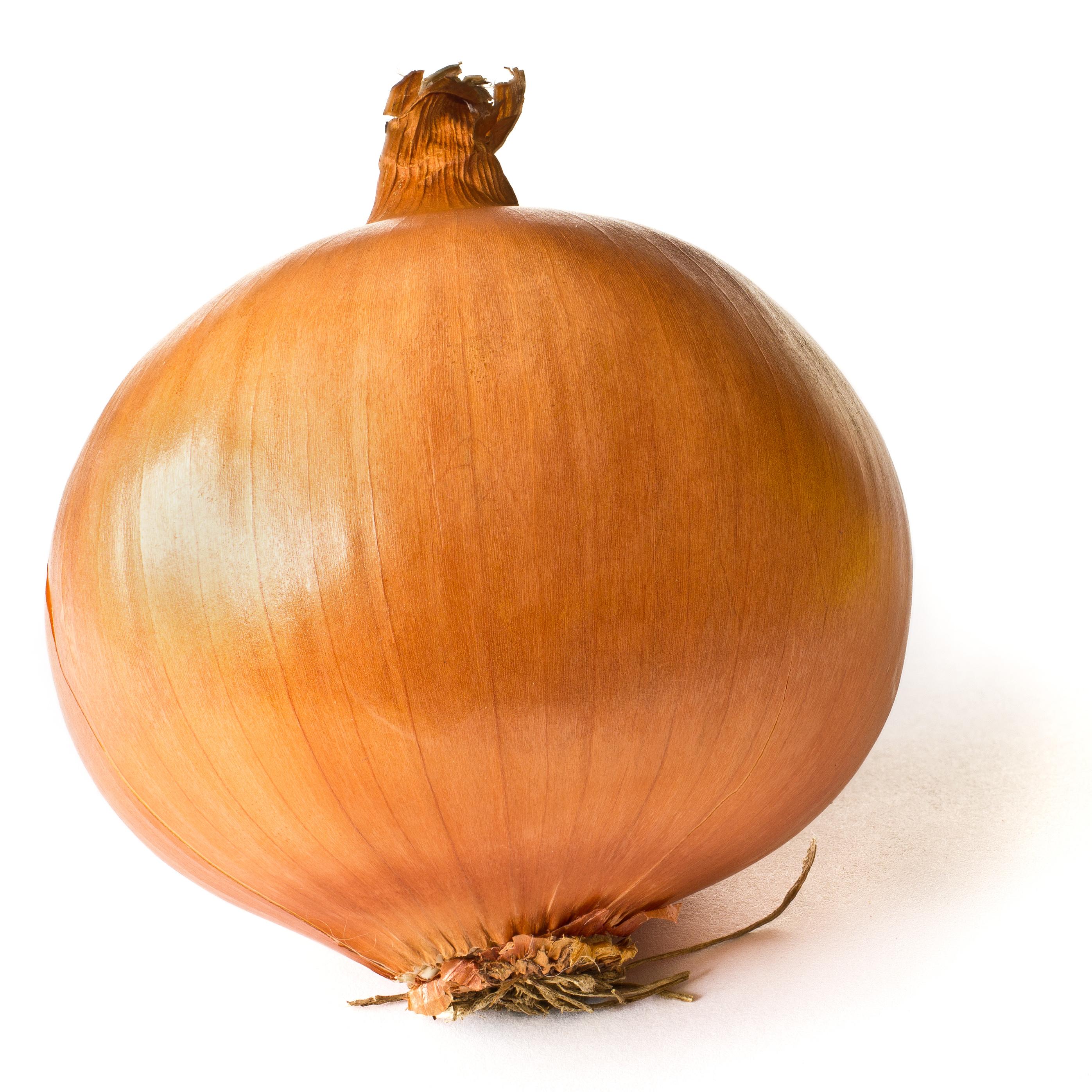 Yellow onion - Wikipedia