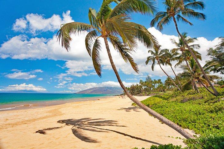 Palm-fringed Maui beach