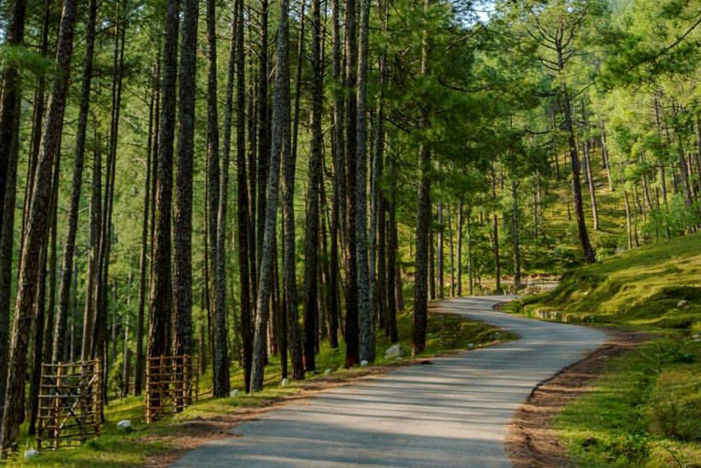 The Dazzling Pine Forest Ooty– Royal Leisure Tours