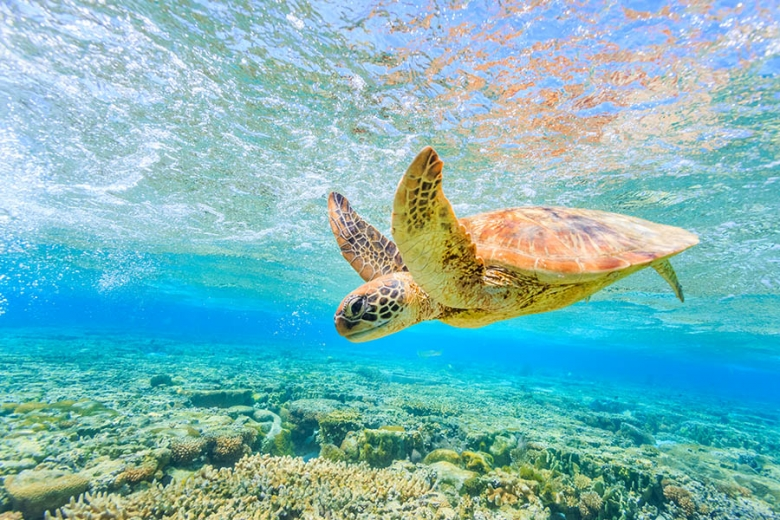 The Great Barrier Reef is the largest eco-system in the world