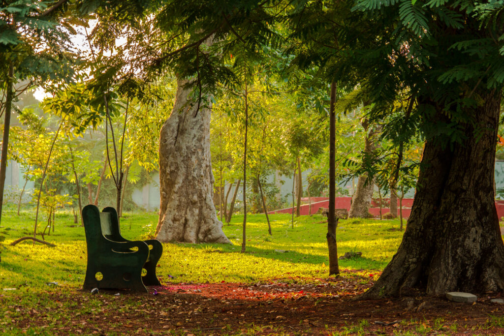The_lonely_bench_at_Botanical_Garden_Pondicherry_India-scaled