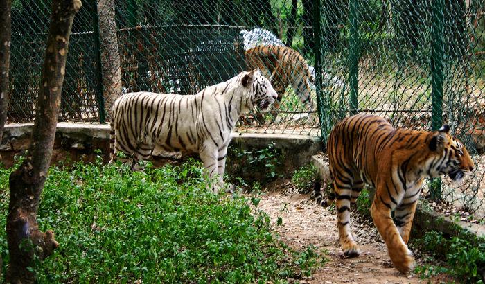 bannerghatta_national_park.jpg