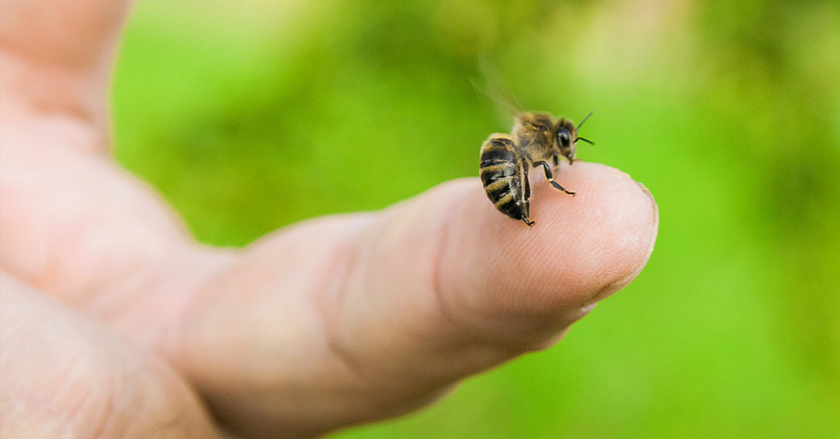 How to Remove a Bee Stinger, Wasp Stinger, or Hornet Stinger