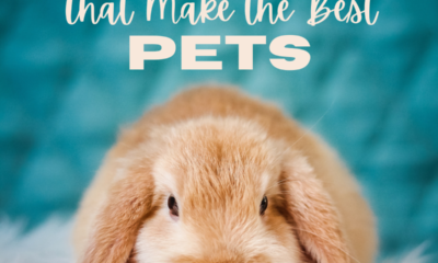 Top 10 Rabbit Breeds That Makes The Best Pets