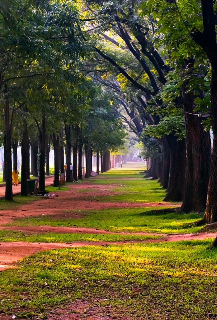 cabbon-park
