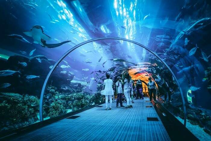 Dubai Aquarium & Underwater Zoo: All You Need To Know!
