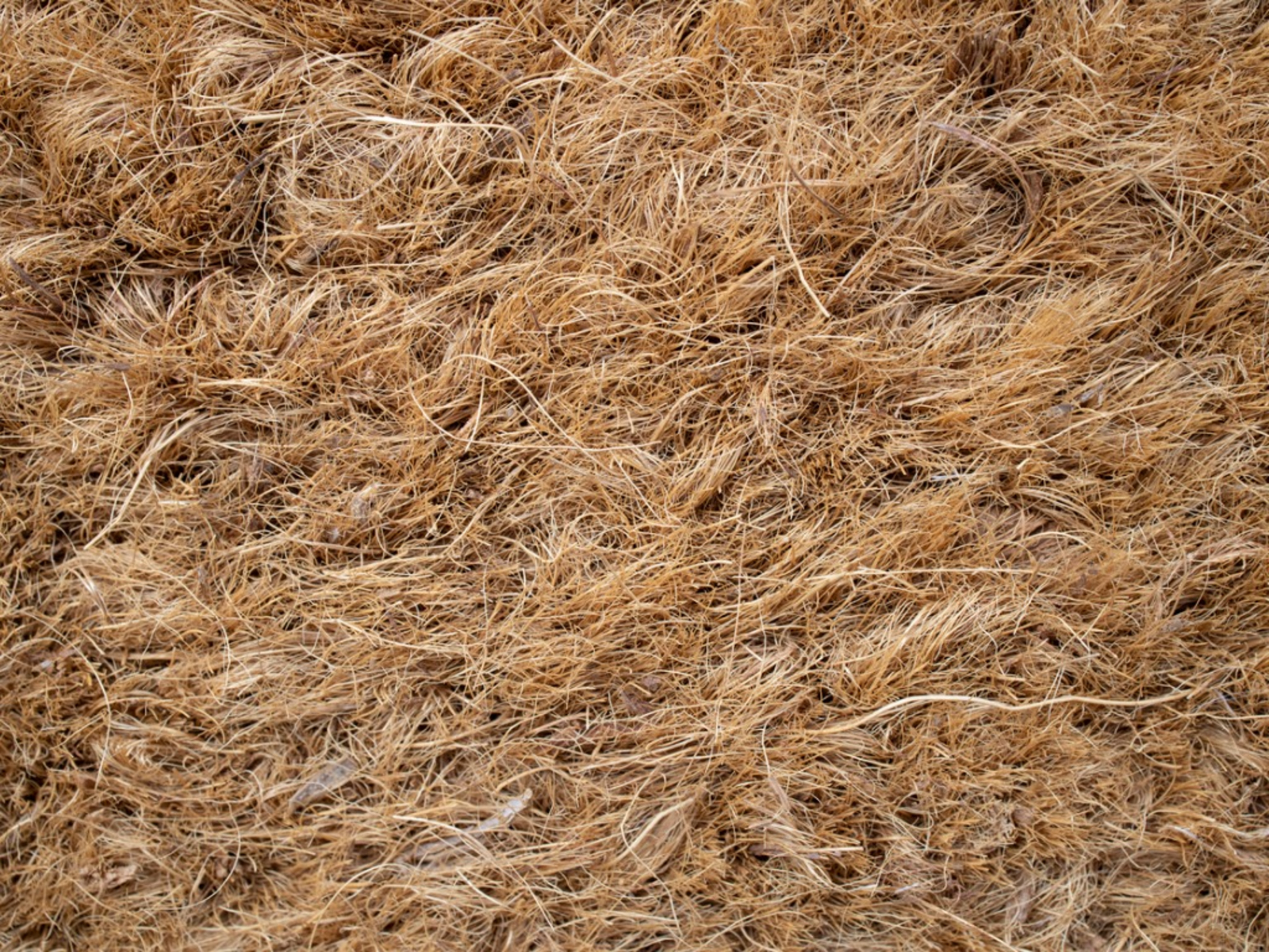 Coconut Coir Mulch Benefits - Suggestions For Coir Mulch Uses In The Garden