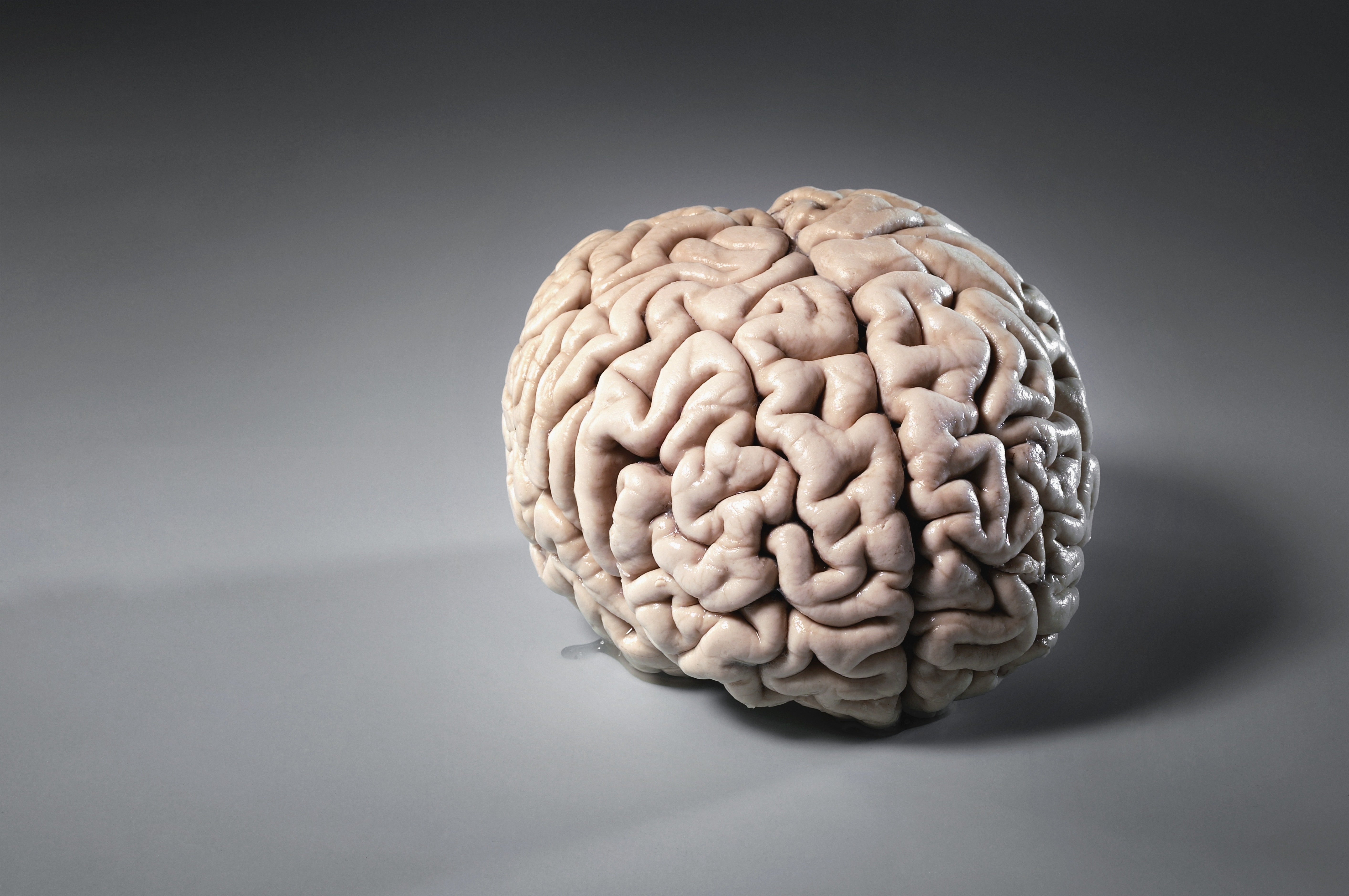 You don't have a male or female brain – the more brains scientists study, the weaker the evidence for sex differences