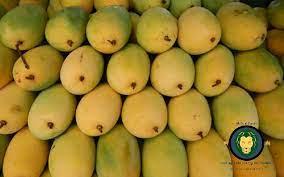 gir kesar mango
