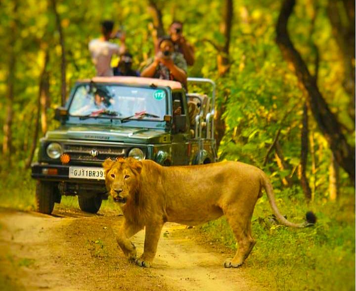 Gir National Park Safari - A Detailed Guide | Gujarat | Hikerwolf