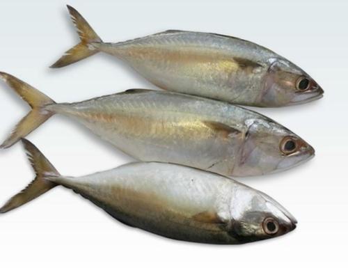 indian-mackerel-bangda-fish.