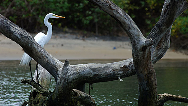 kadalundi_bird_sanctuary.