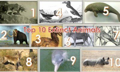 Top 10 Extinct Species