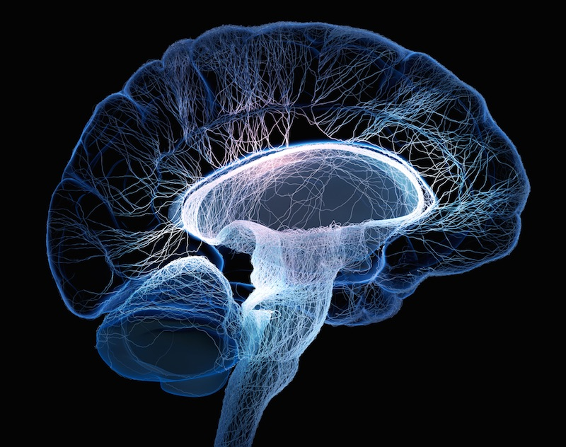 Human Brain: Facts, Functions & Anatomy | Live Science
