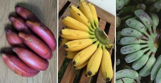 Top 10 Banana Varieties