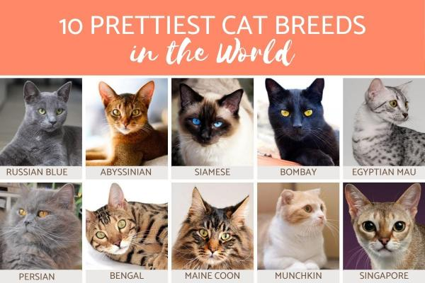 Top 10 Cat Breeds In The World